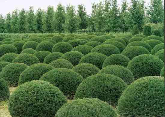Kuliste Drzewa I Krzewy Do Ogrodu