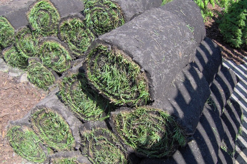 trawnik zrolki