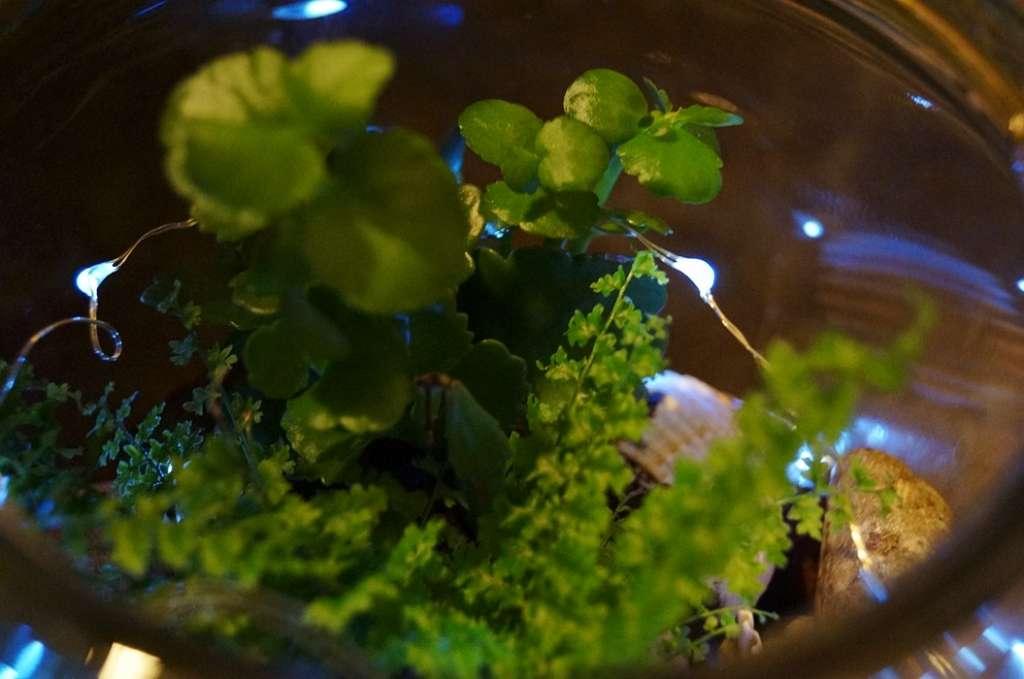 terrarium garden