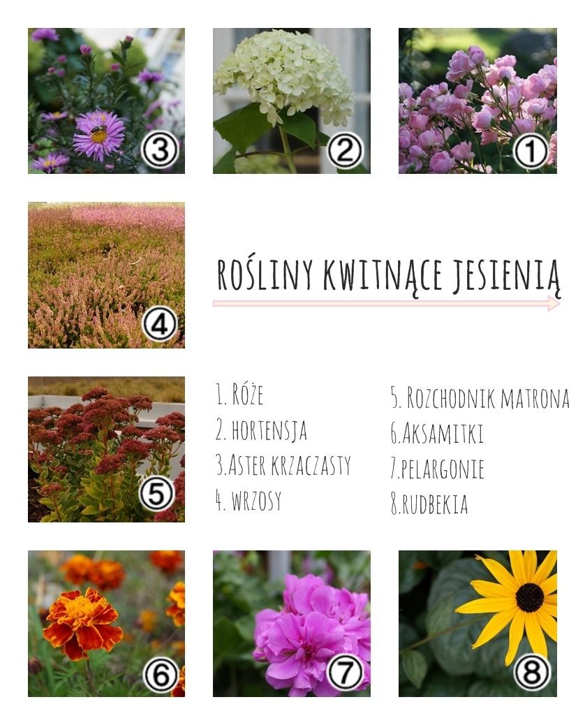 rośliny kwitnące jesienią