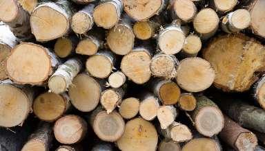 ścięte pnie drzew