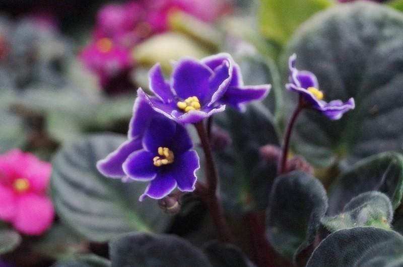 kwiaty doniczkowe na boże narodzenie