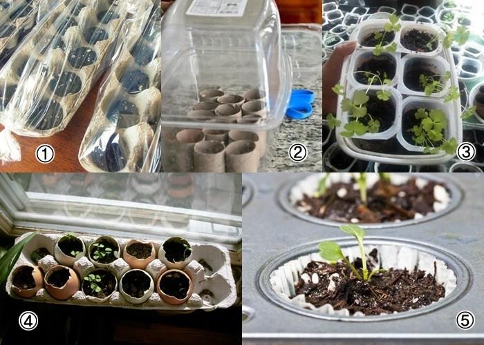Jak przygotować rozsadę warzyw wdomu ?