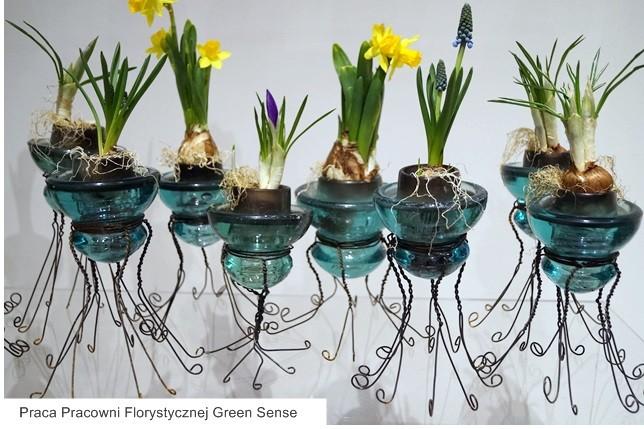 wystawa tulipanów