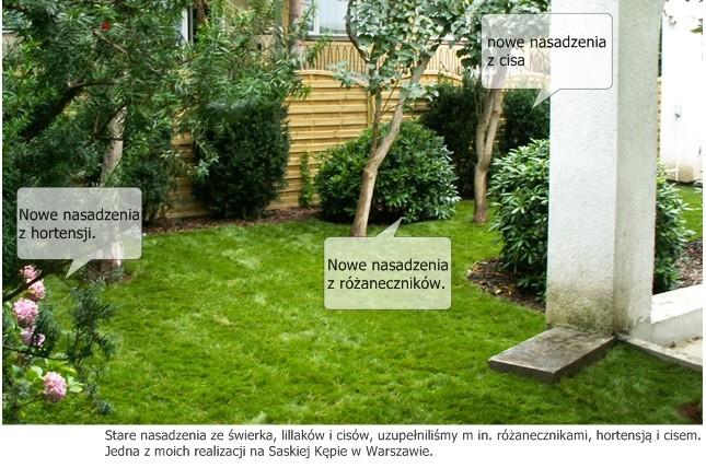 stary ogród nasadzenia