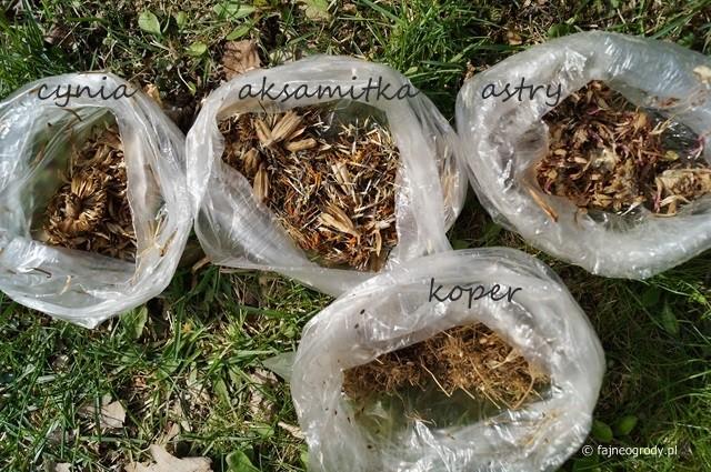 4629501a738a7e Jak przechowywać zebrane nasiona?