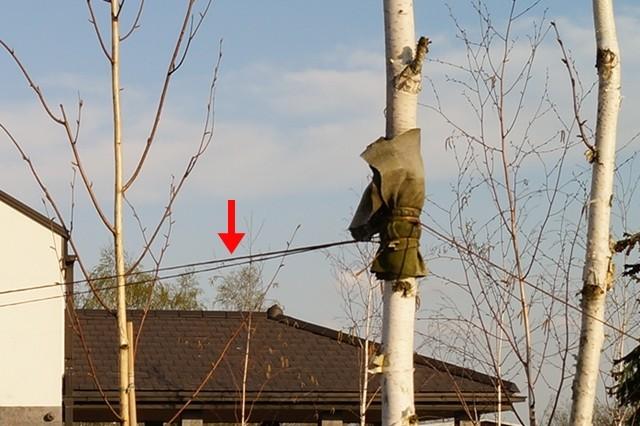 stabilizacja drzew