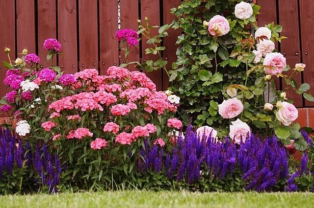 ogród angieski