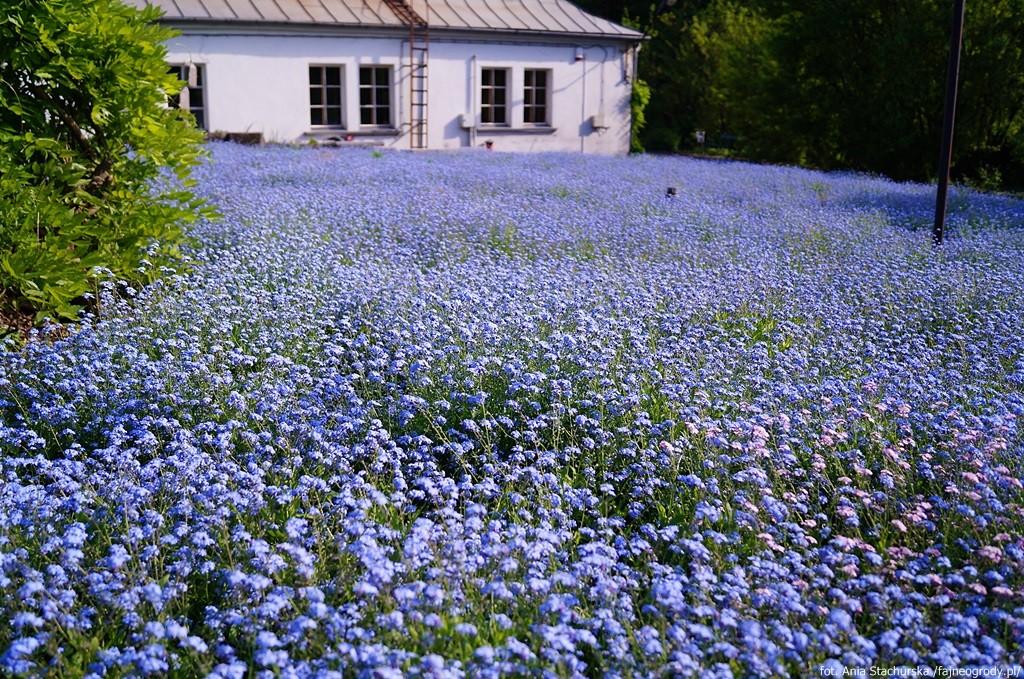Ogród botaniczny w Krakowie.