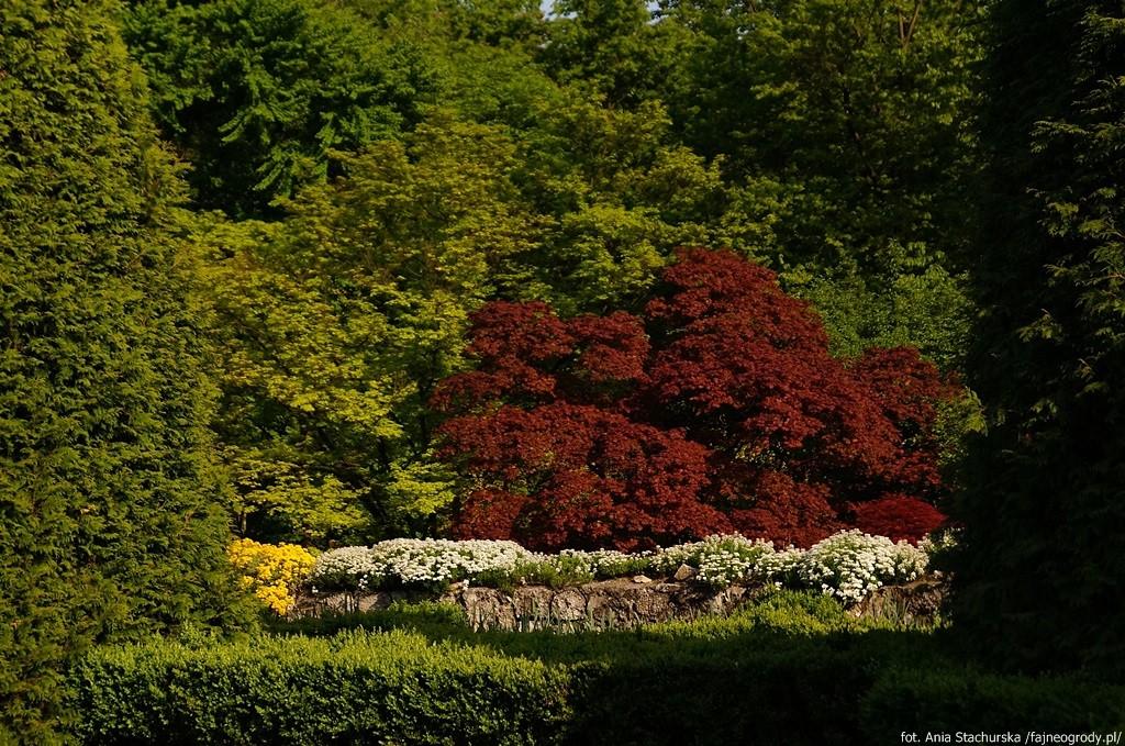 Ogród botaniczny wKrakowie.