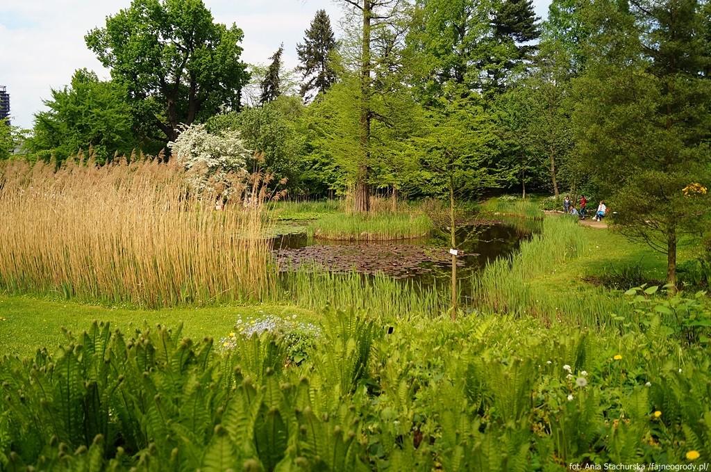 ogród botaniczny w krakowie (5)