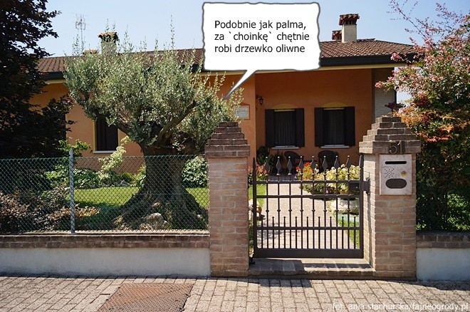 włoskie ogrody