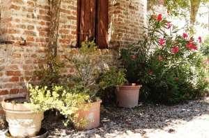 ogród śródziemnomorski (5)