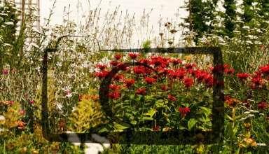 ogród kwiatowy