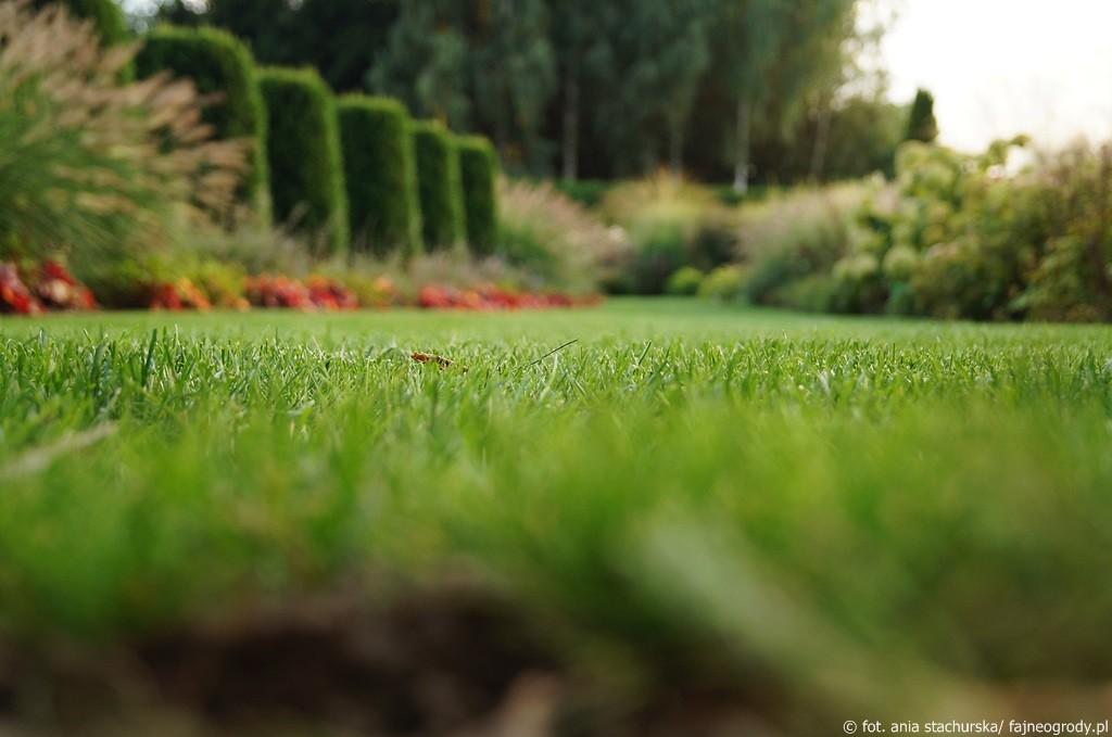 ogród traw