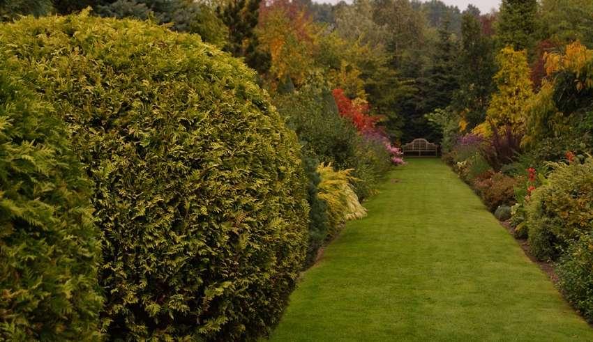 szkółka szmit ogród