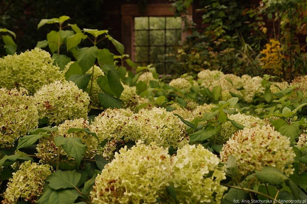 ogród angielski szmit
