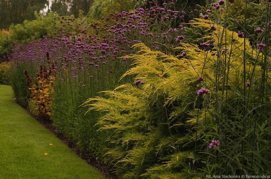 szkółka szmit ogród pokazowy