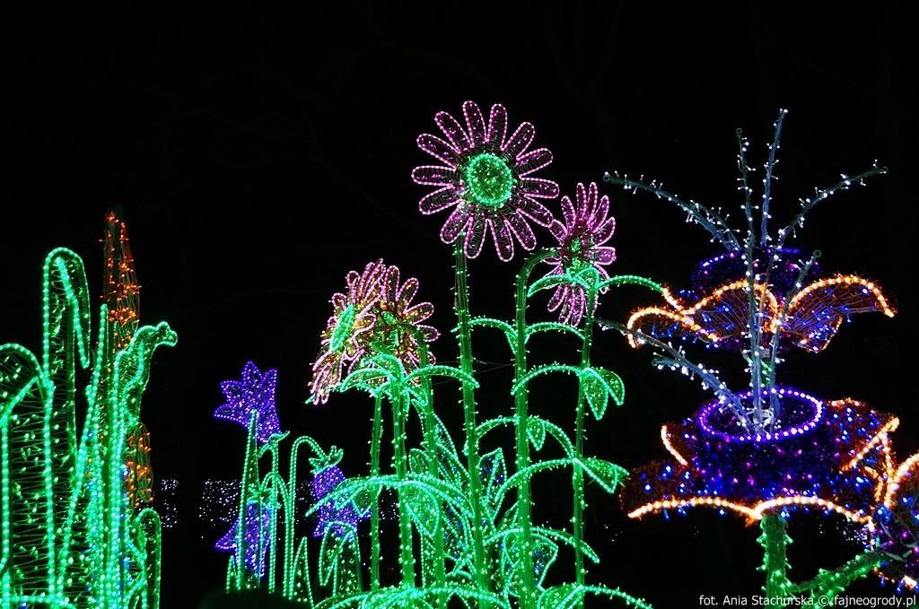 Magiczny Ogród Króla