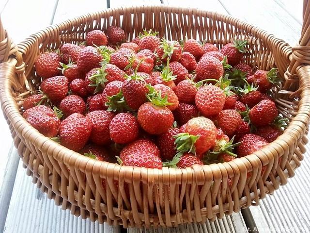 Ogródek warzywny zbiory