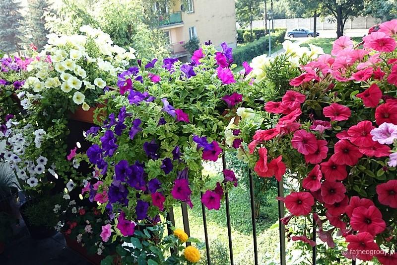 balkon jak ogród