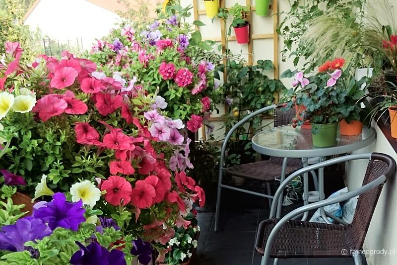 Balkon Jak Ogród 1