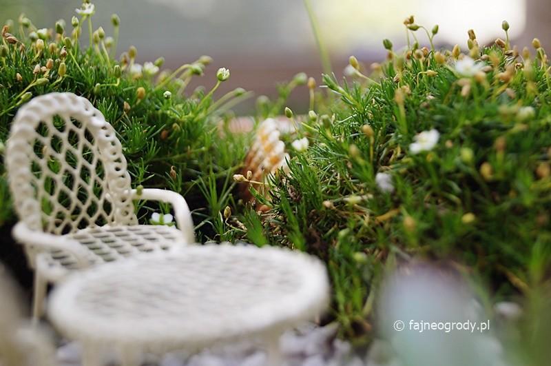 ogródek wróżek