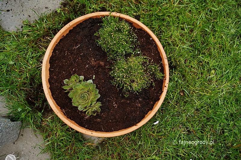 mini gardening