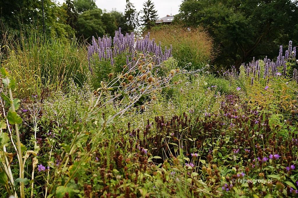 byliny do ogrodu