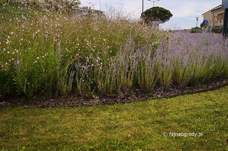 ogrody bylinowe perovskia
