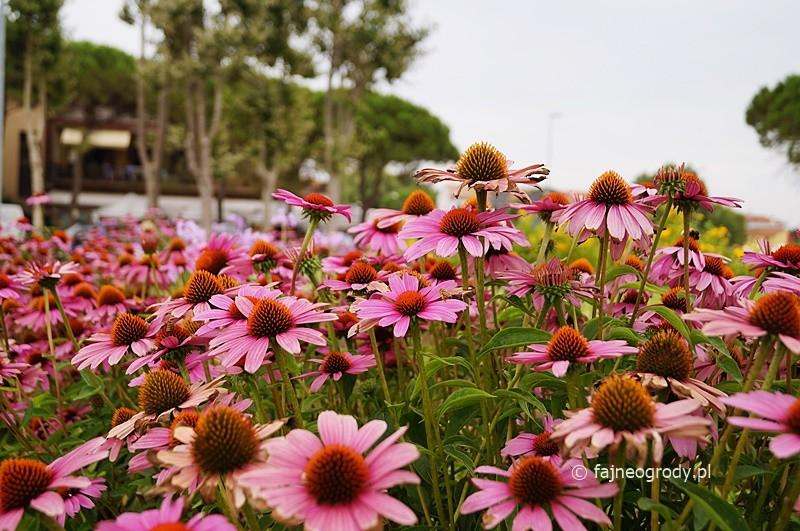 ogrody bylinowe