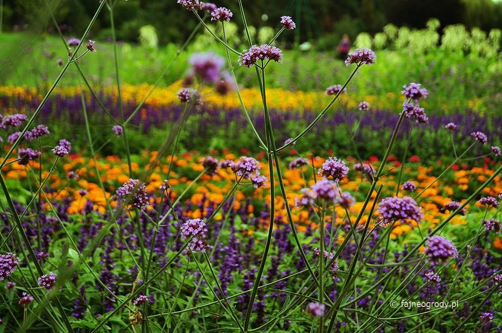 ogród bylinowy