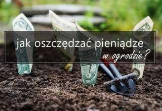 Jak oszczędzać pieniądze w ogrodzie