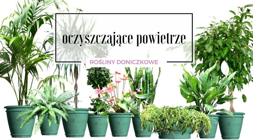 Popularne Rośliny Doniczkowe Oczyszczające Powietrze
