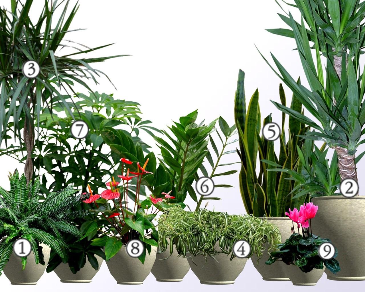 Rośliny Do Biura Które Przeżyją W Trudnych Warunkach Mocna Dziewiątka