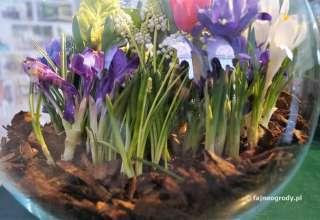 kwiaty cebulowe w szkle