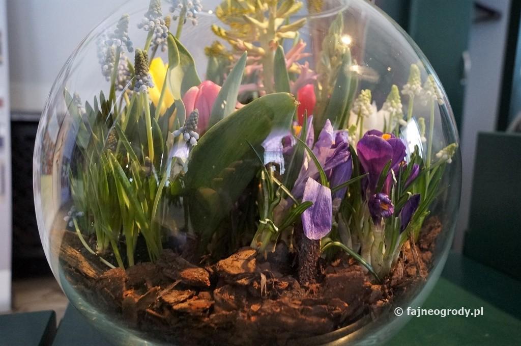 Dekoracje Z Kwiatów Cebulowych W Szkle Na Wielkanocny Stół