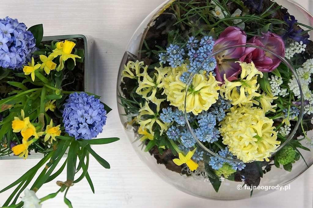 kwiaty cebulowe wszkle