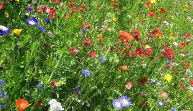 kwiaty jednoroczne