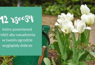 nasadzenia w ogrodzie