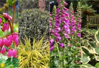Rośliny do cienistego ogrodu.