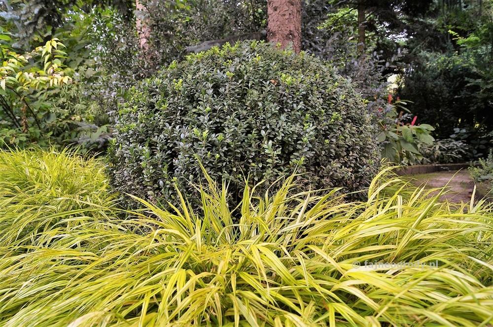 Rośliny docienistego ogrodu (5)