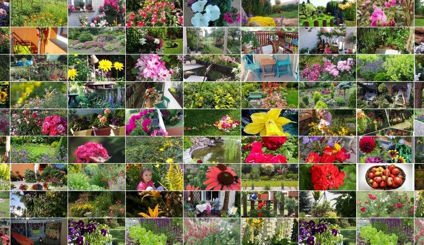 viva garden