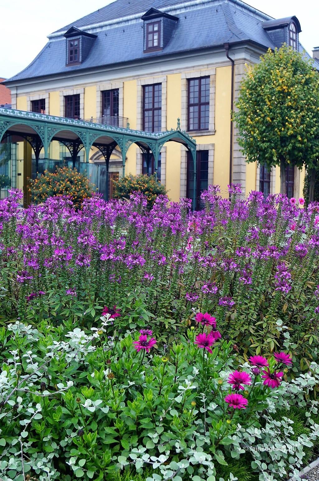 Ogród kwiatowy (6).