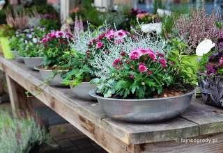jesienne dekoracje do domu i ogrodu