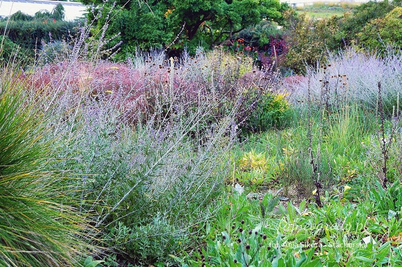 ogród preriowy