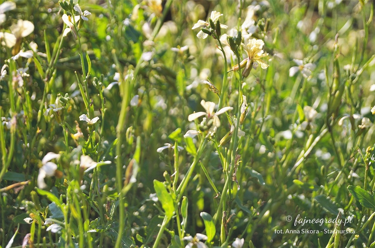 Kwiaty doogrodu warzywnego