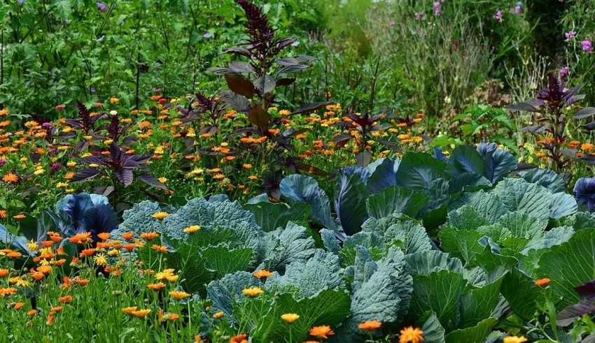 Wybieramy Kwiaty Do Ogrodu Warzywnego Moich 9 Typow