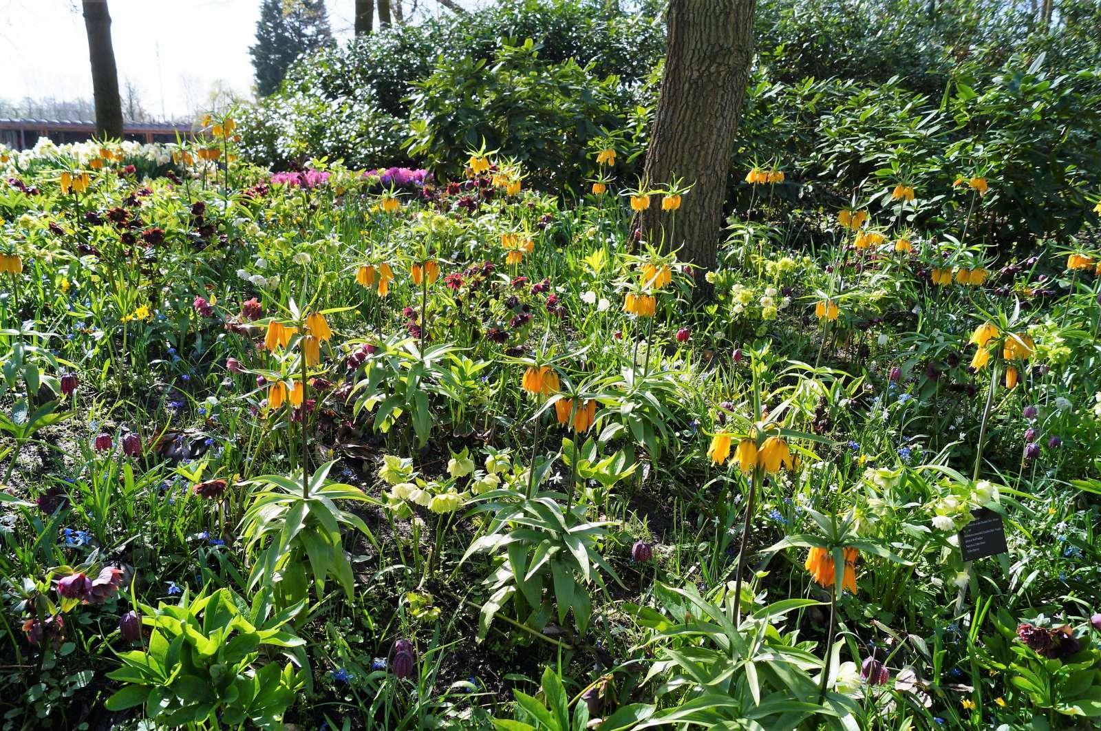 Wiosenna łąka Kwietna Z Kwiatów Cebulowych Część 1 Fajneogrodypl