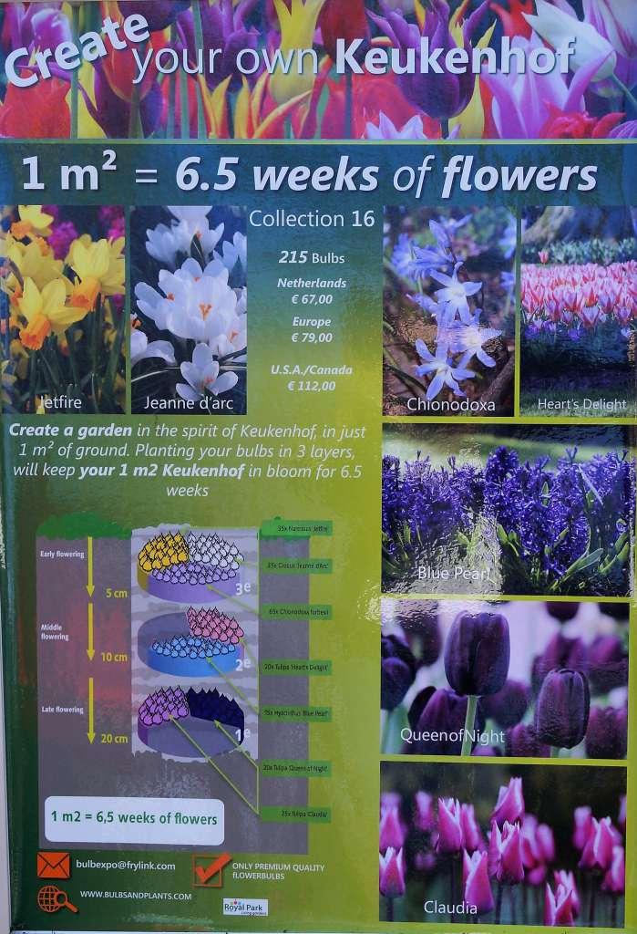 Wiosenna łąka kwietna zkwiatów cebulowych.